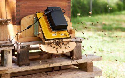 Was wir von den Bienen lernen können…